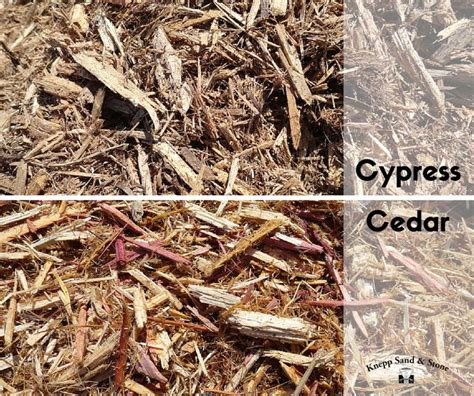cypress very bug and insect resistant and it is an excellent matting mulch meaning that it