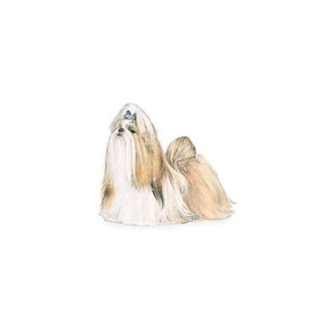 shih tzu clothes uk shih tzu kuka s world designer clothes and luxury accessories for pets