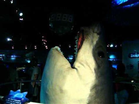 ataque de tiburon submarino en sudafrica ataque de tiburon submarino en sudafrica ataque de tiburon