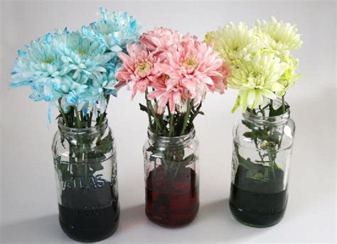 coloring flowers with food color how to make flowers change color using food coloring