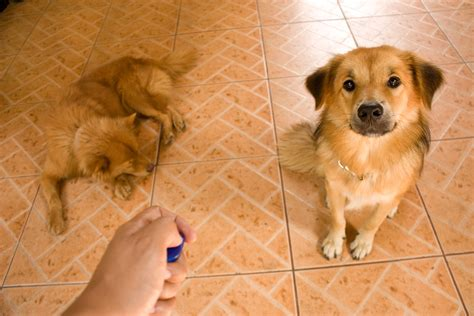 how to clicker a puppy how to make gelatin clicker treats for your 5 steps