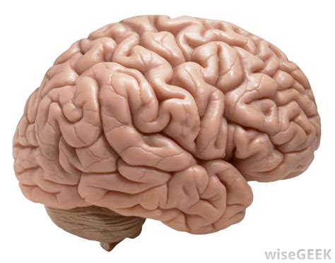 Brains Not by The Human Brain Tellwut