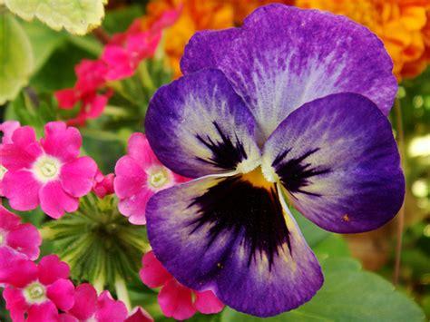 most beautiful flowers around the world information hub of besties most beautiful flowers around