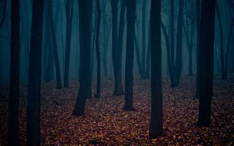 dark wallpaper photos dark forest wallpapers wallpaper cave