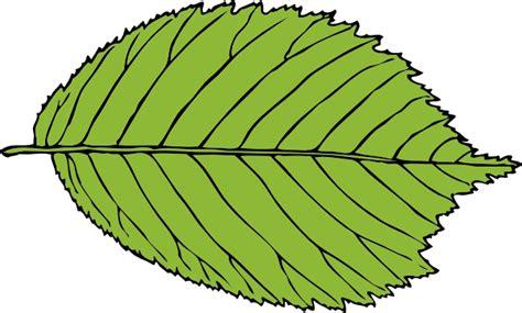 leaf clip art at clker com vector clip art online bi serrate leaf clip art at clker com vector clip art