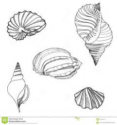 seashell sand set hand drawn stylish summer stock images