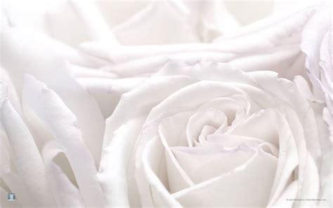 significato fiori di bach fiori significato linguaggio dei fiori
