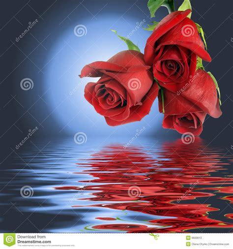 imagenes de flores sobre el agua ramo a partir de tres rosas y lunas rojas imagen de