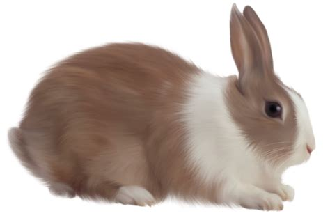 bunny images rabbit clipart transparent background pencil and in