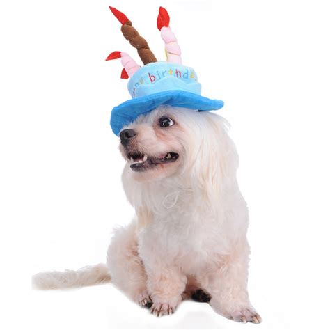 hats for dogs birthday cake caps pet hat for dogs cats wonderful gift hats a cake with candles