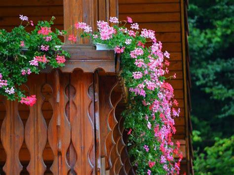 Schöne Balkonpflanzen by Balkon Blumen F 252 R Eine Sch 246 Ne Au 223 Engestaltung Archzine Net