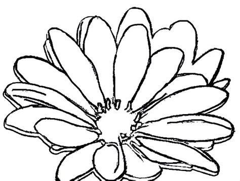 types of flowers coloring pages daisy flower outline cliparts co
