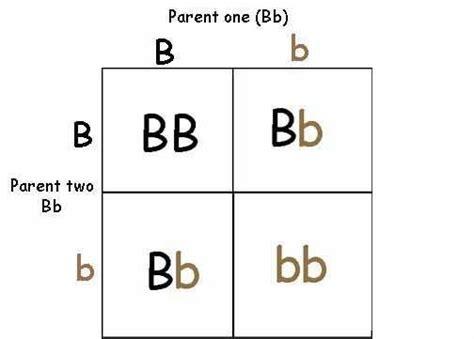 punnett square for eye color how is eye color determined quora