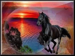 fonds ecran chevaux