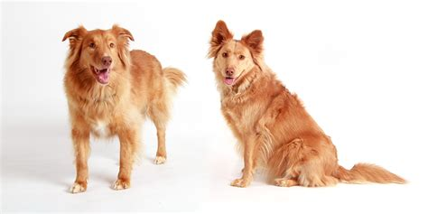 dogs two two dogs