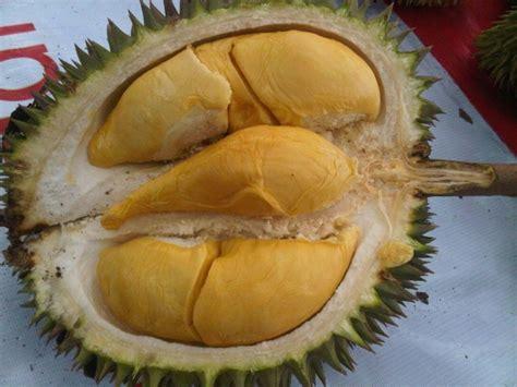 Harga Bibit Durian Bawor 2017 harga bibit durian bawor di tegal www stewartflowers net
