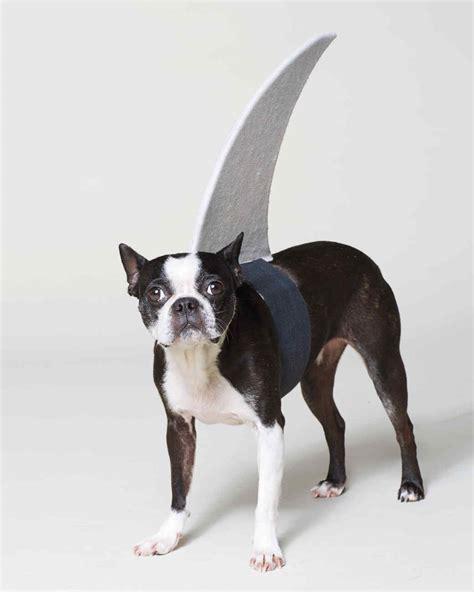 r for dogs think fin shark costume martha stewart