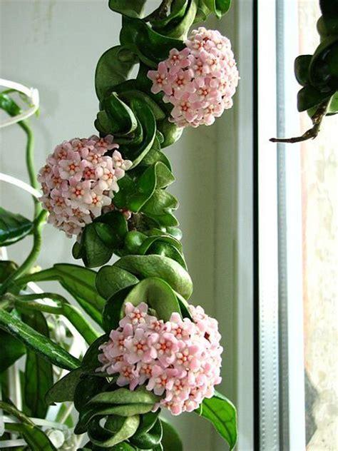 indoor plants india best 25 indoor plants india ideas on pinterest plants