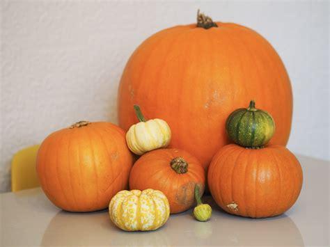 10 Easy No Carve Pumpkin Easy No Carve Pumpkin Decorating Ideas Baby