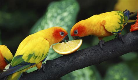10 fun facts about parrots all things pin