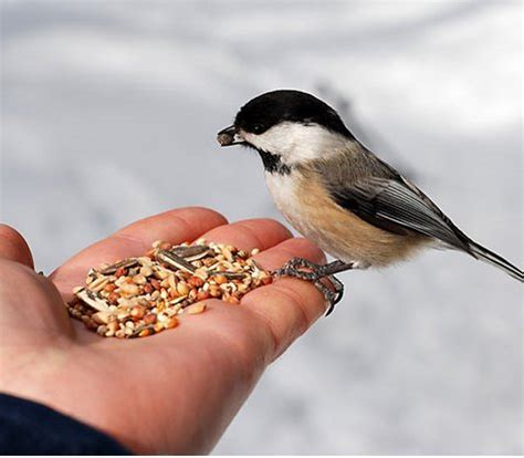 celebrating february national bird feeding and pets