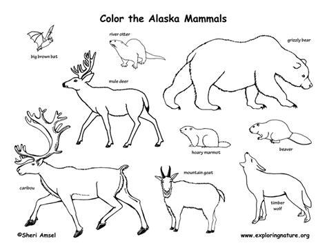 Alaska Flag Coloring Page Az Coloring Pages Alaska Flag Coloring Page
