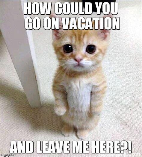 How Could You Meme - cute cat meme imgflip