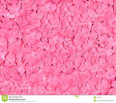 red and pink pink and red petals background royalty free stock image