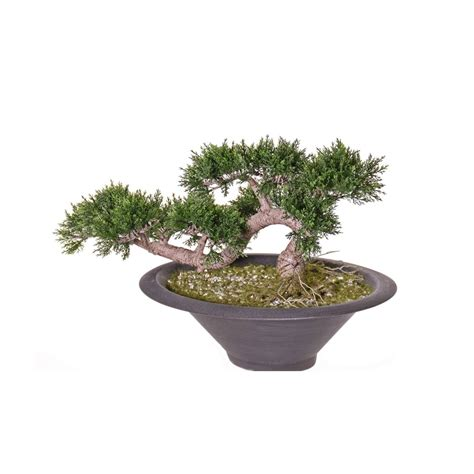 Bonsai Tree Planters by Artificial Bonsai Tree A Replica Bonsai Plant For The