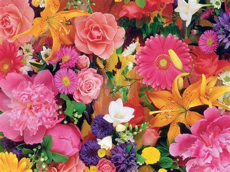 blooming flower blooming flowers flower
