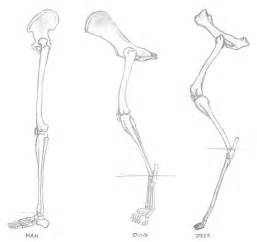 Whitetail deer anatomy furthermore half moon clip art further deer
