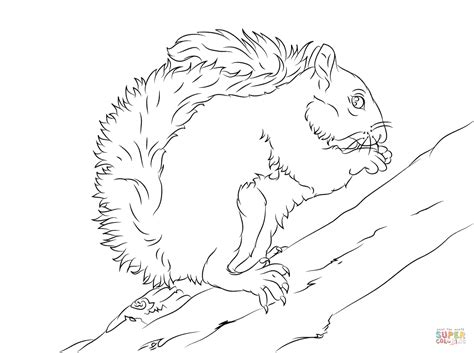 coloring page of a gray squirrel eastern grey squirrel on a tree coloring page free