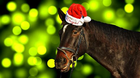horse christmas santa hat  photo  pixabay