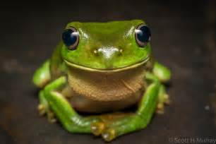 Smiling frog scott murray flickr in amazing pics of a frog