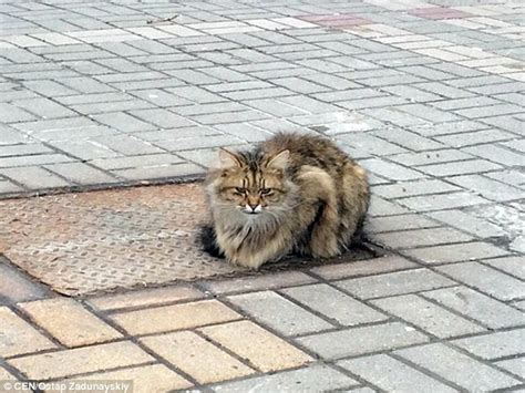 waiting for owner cat waited in the same spot every day for his owners for a year after being