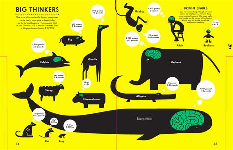 size of brain the are all bright infographics for all ages simon rogers