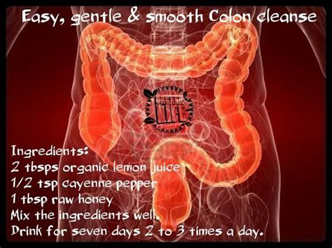 Intestinal Mucus Detox by 17 Best Ideas About Colon Cleanse Drinks On