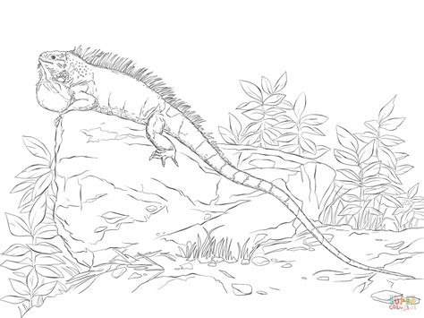 coloring page for iguana realisitc green iguana coloring page free printable