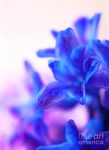 Blue and purple flowers blue and purple flowers