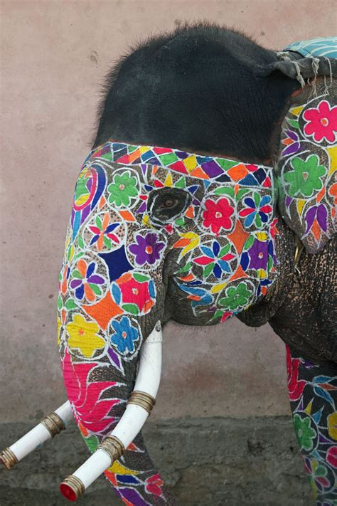 Decorated Elephants by Decorated Elephant At The Annual Elephant Festival In