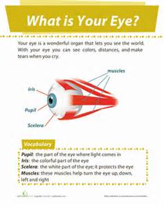 what part of the eye has color eye diagram worksheet education