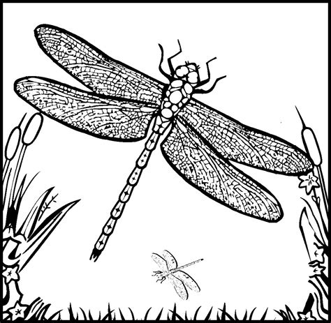 Dragonfly Pictures Pics Images And Photos For Your Dragonfly Coloring Page