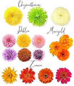 List Of Fall Flowers by Gallery For Gt List Of Fall Flowers For Weddings