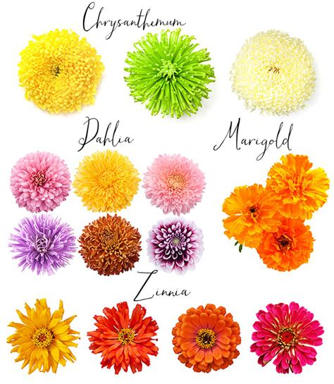 list of fall flowers fall wedding flowers list ideas pictures wedding flower