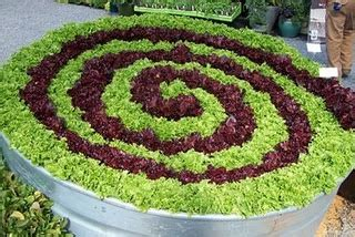 1000  images about Lettuce / Greens Garden Options on