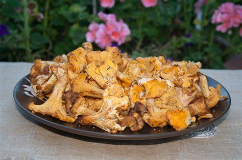 come cucinare i funghi finferli funghi ricette di cucina