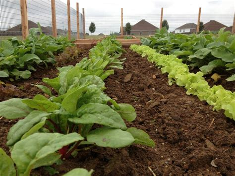 grant funding for community gardens tips on how to fund a