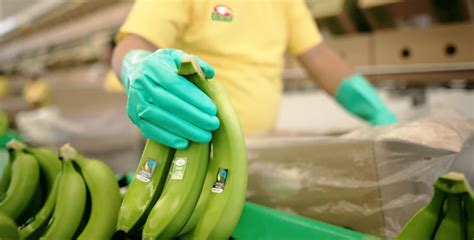Fairtrade America brings in new fruit sources in bananas ... International Trade Charts 2017