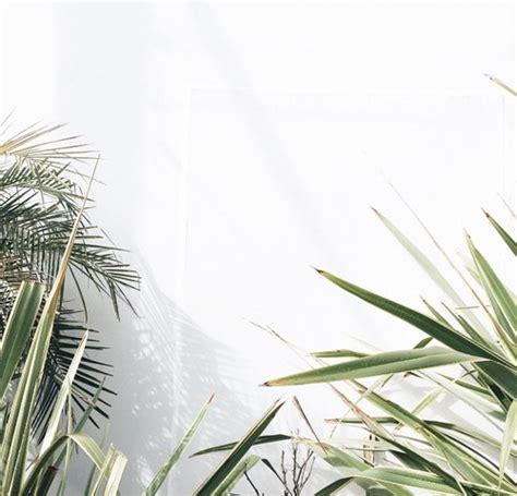minimalist plants tumblr