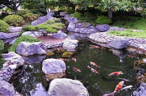 Koi Garden by Japanese Garden Tranquil Koi By Andyserrano On Deviantart